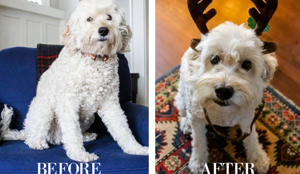 Steps To Groom Your Own Dog At Home