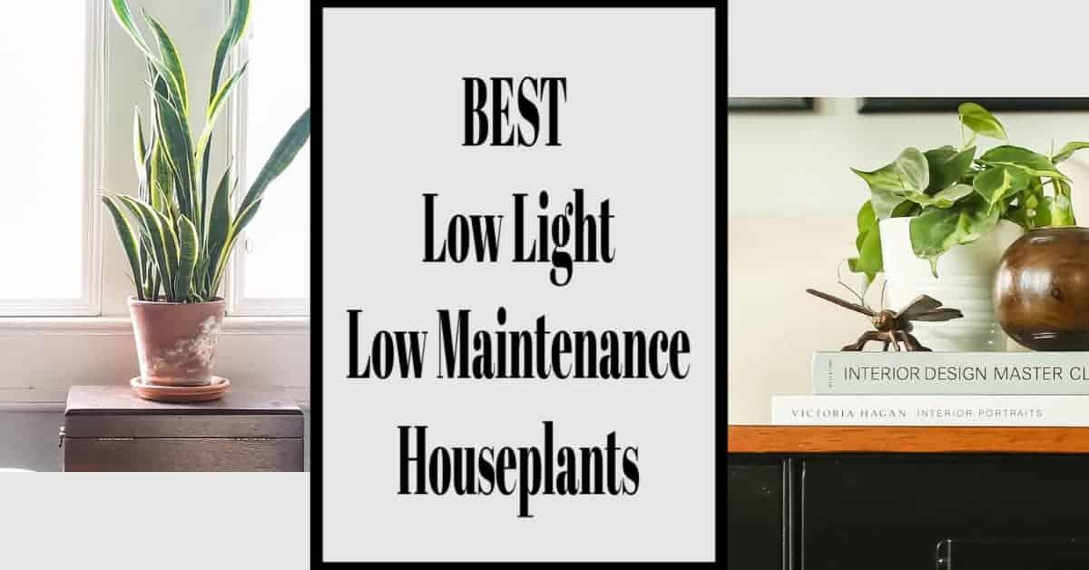 Low Light Low Maintenance House Plants