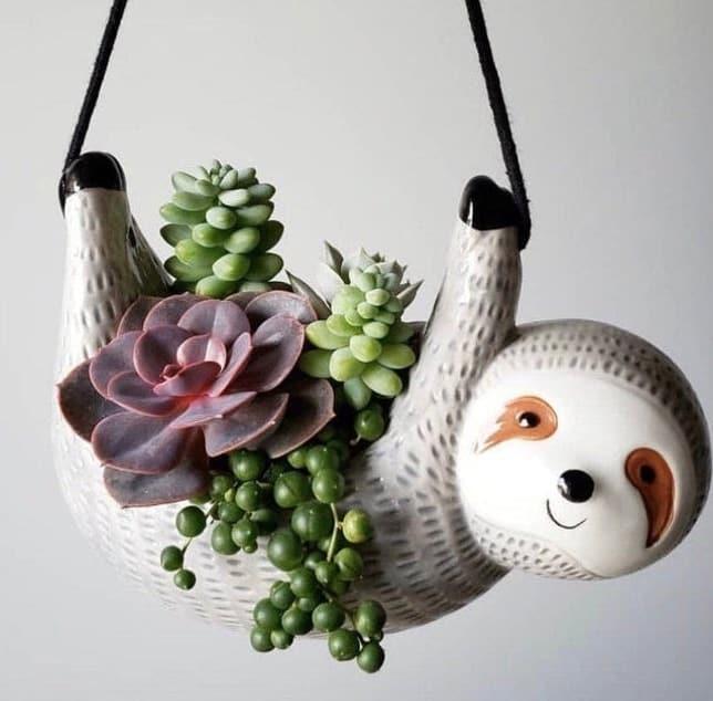 DIY custom gift box plants