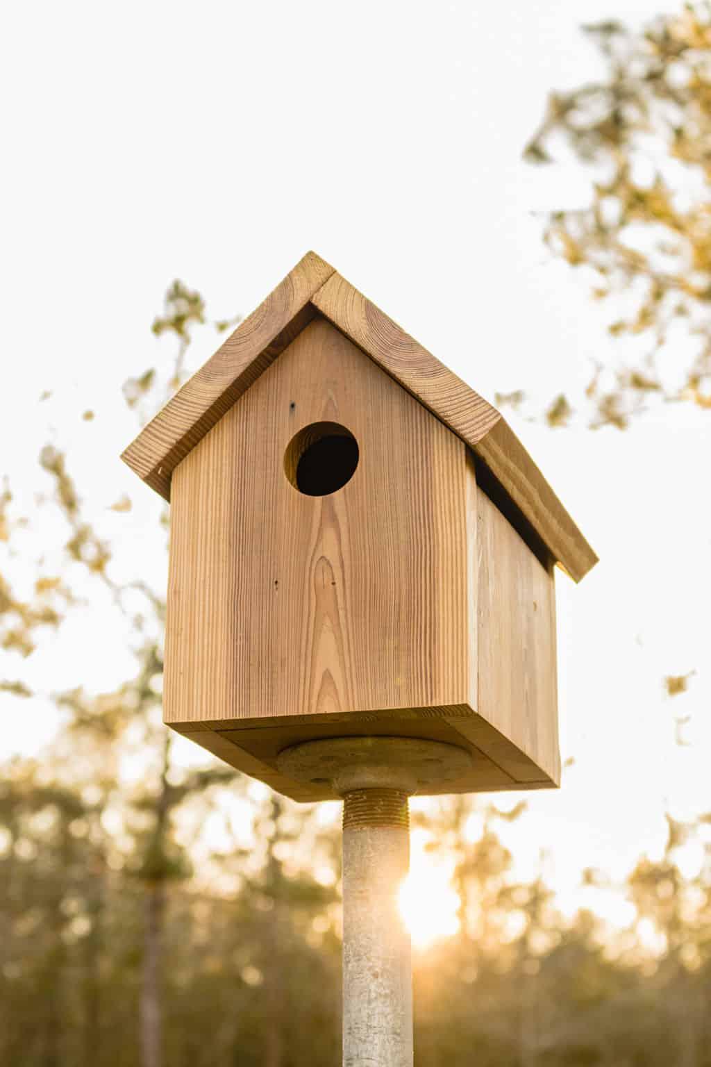 diy bird house